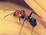 01.Ant Seed_Image